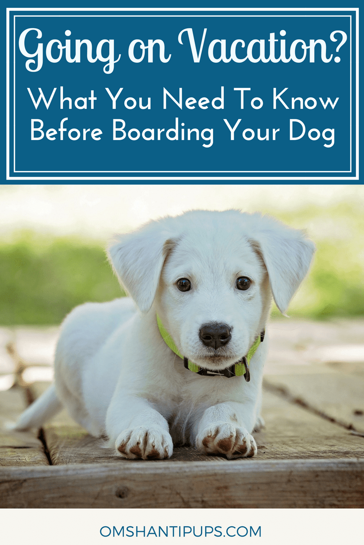 It's tough leaving our dogs when we go on trips.  It's especially difficult if you haven't boarded them before. These tips will make your dog more comfortable and let you trust those taking care of them, whether at home or at a kennel.
