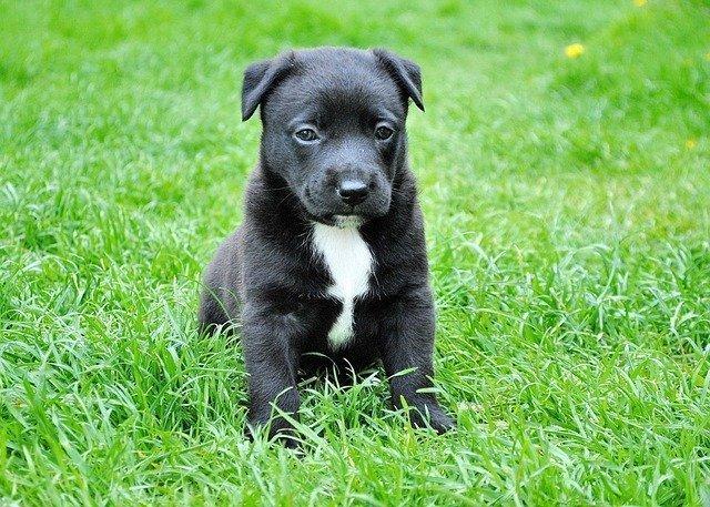 New Puppy Basics