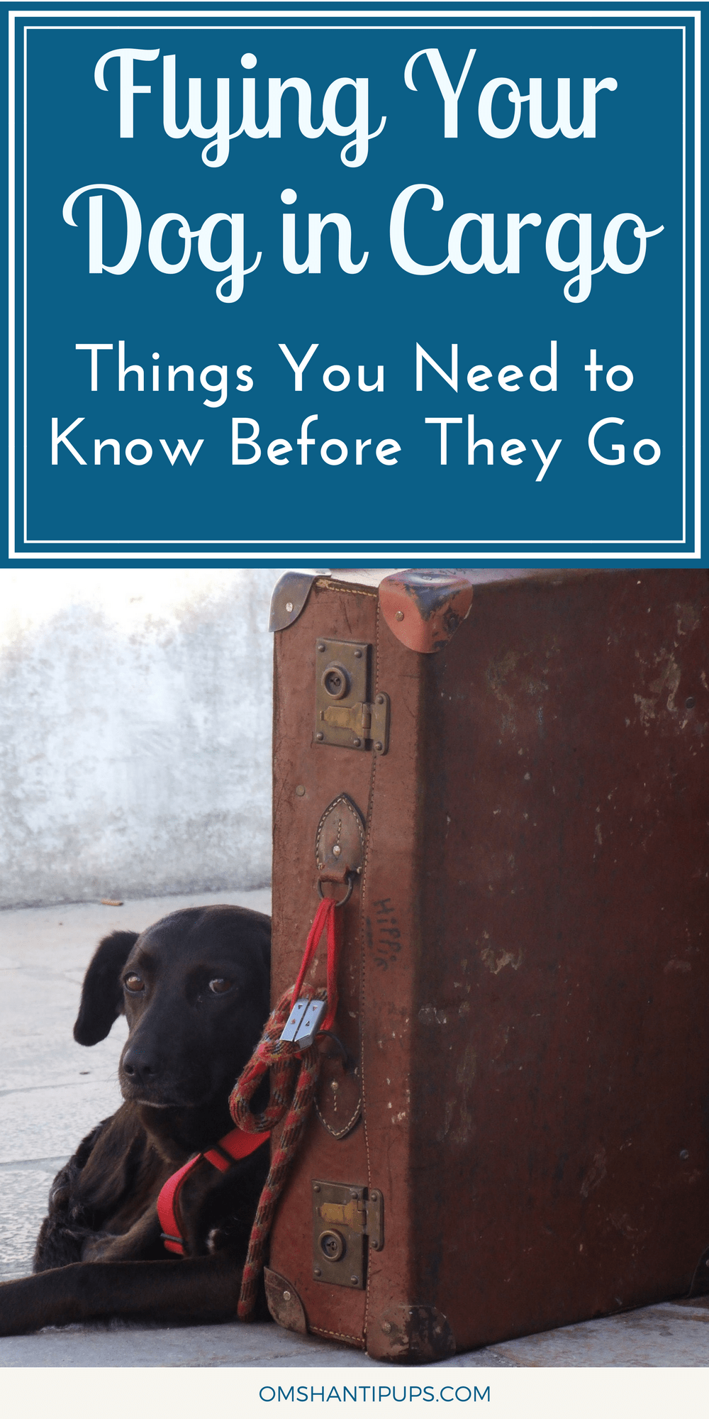 What if you need to travel with your large dog? Whether moving or  going on a long vacation, sometimes dogs must fly in cargo. Here's what you should know!