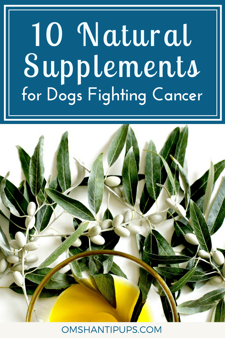 A cancer diagnosis is terrifying, and we would give anything to help our pups through it. These herbs, supplements, and oils have beneficial elements to support your pet through this tough journey.