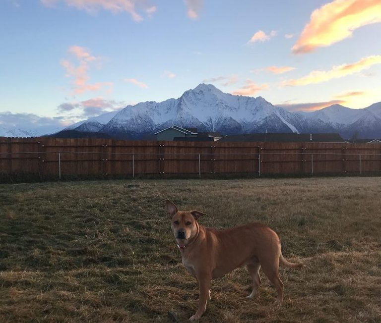 Active Dog Month Guest Post