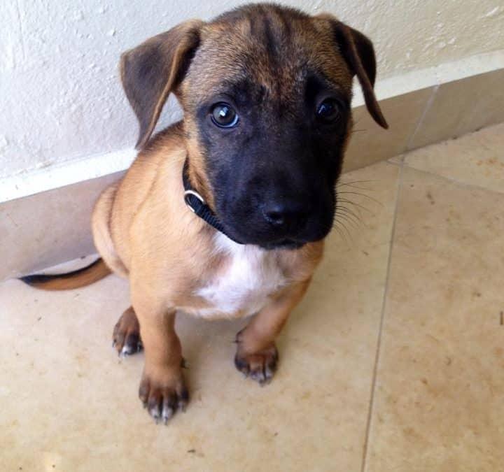 Puppy Rico