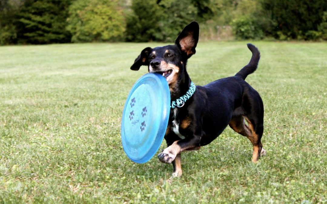 Fun Backyard Games For Your Dog