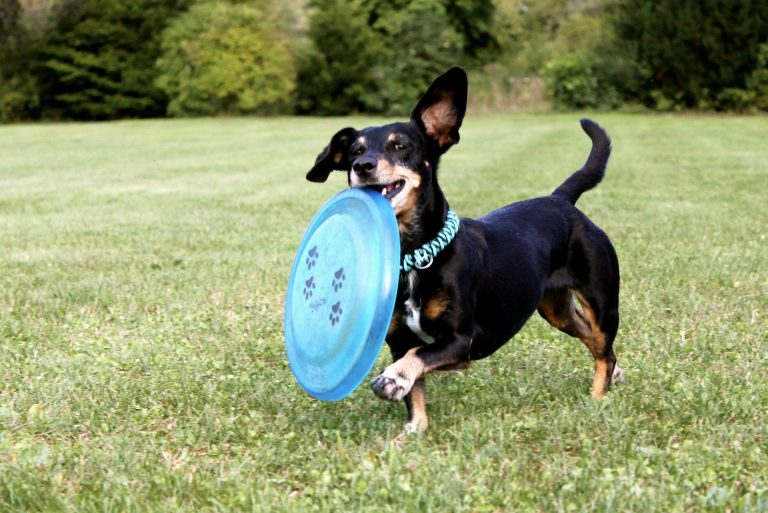 Entertaining Backyard Games To Play With Your Dog