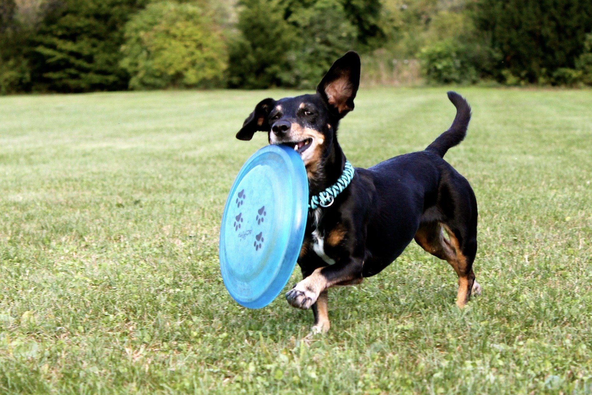Happy dog with frisbee