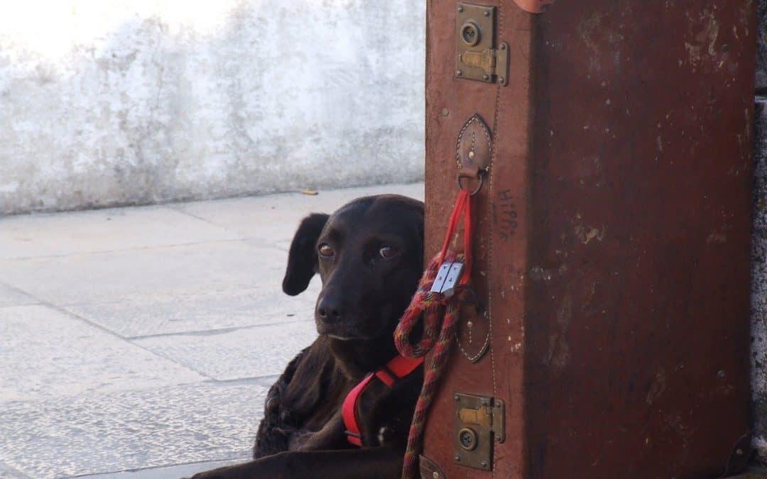 Dog Flying In Cargo