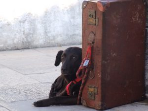 Flying Your Dog in Cargo – Things You Need to Know
