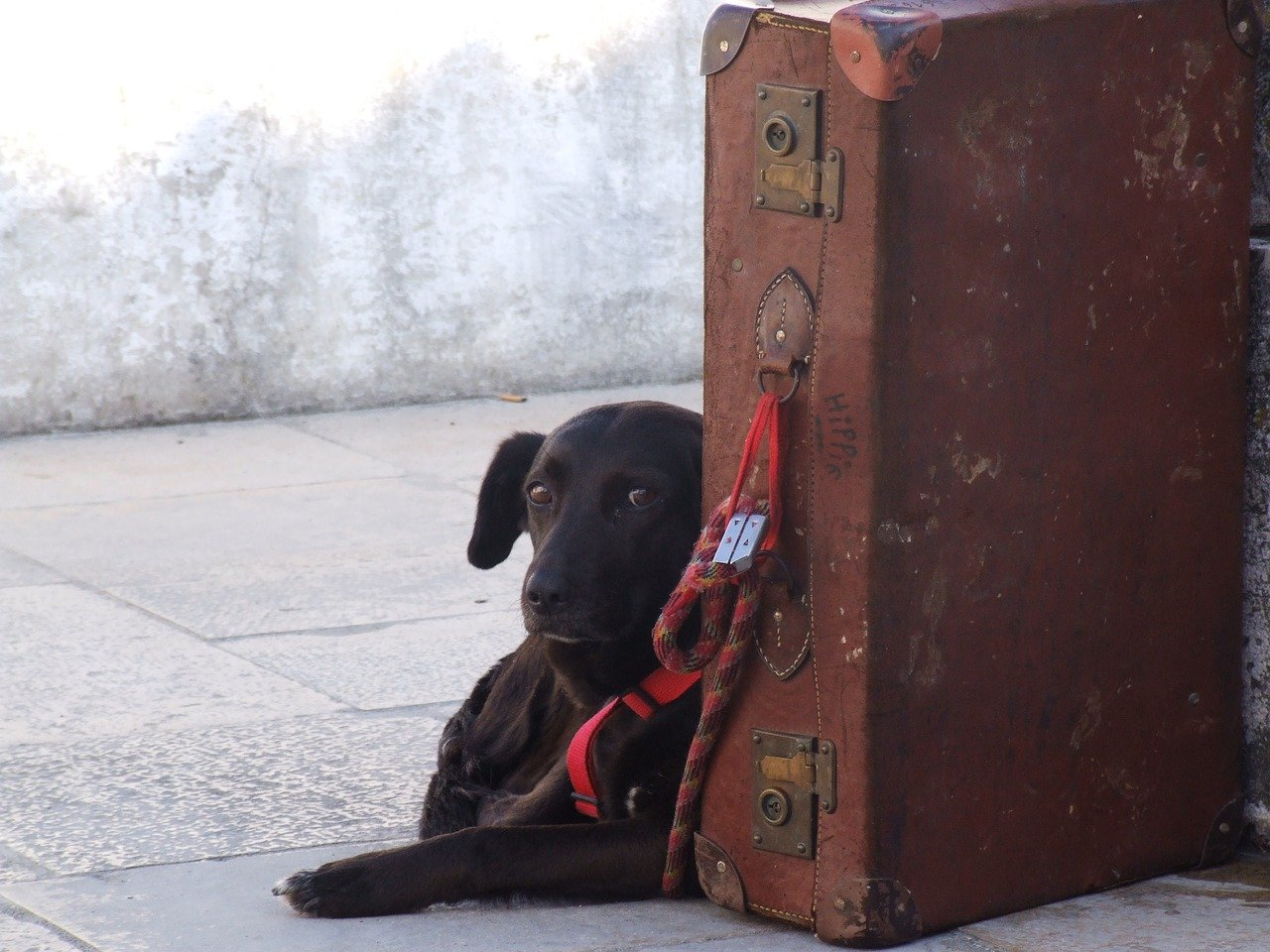 Flying Your Dog in Cargo - Things You Need to Know
