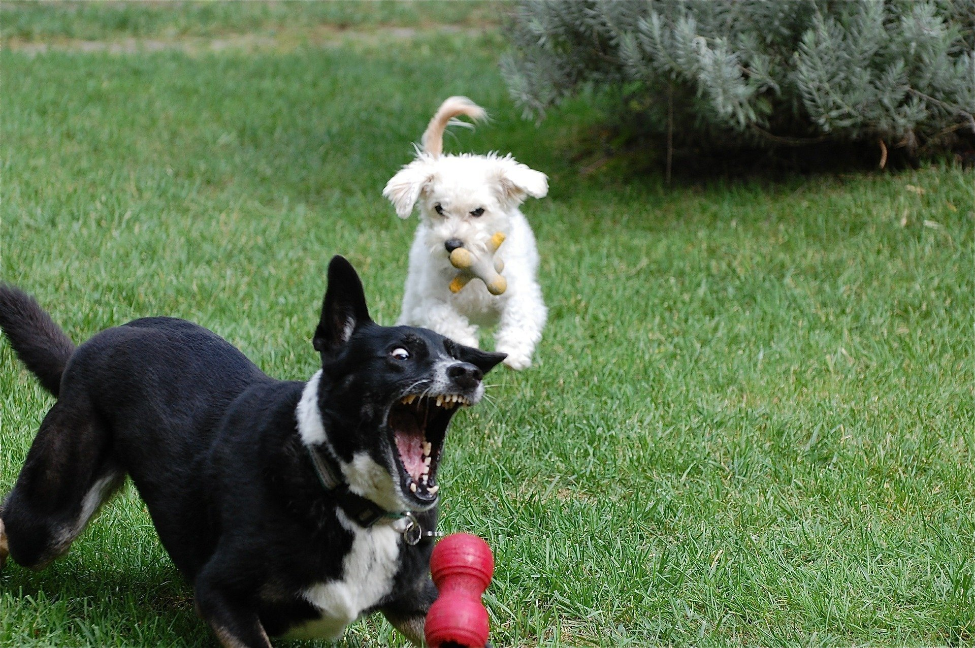 Dogs Playing In Yard - Entertaining Backyard Games To Play With Your Dog