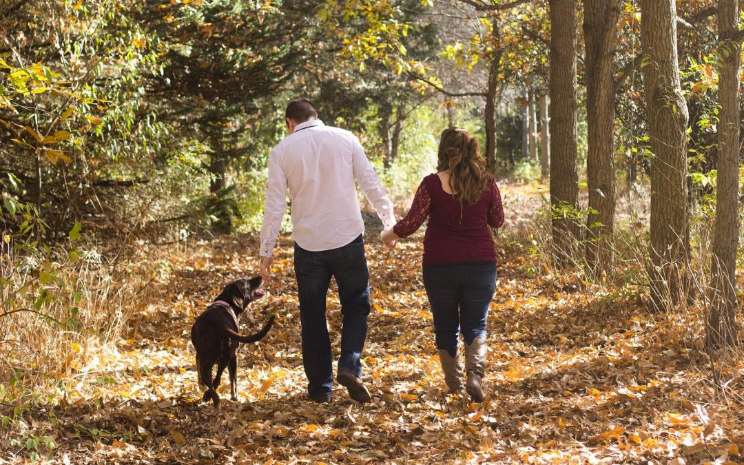 Active Dog Month | Top Tips & Activities For You and Your Dog