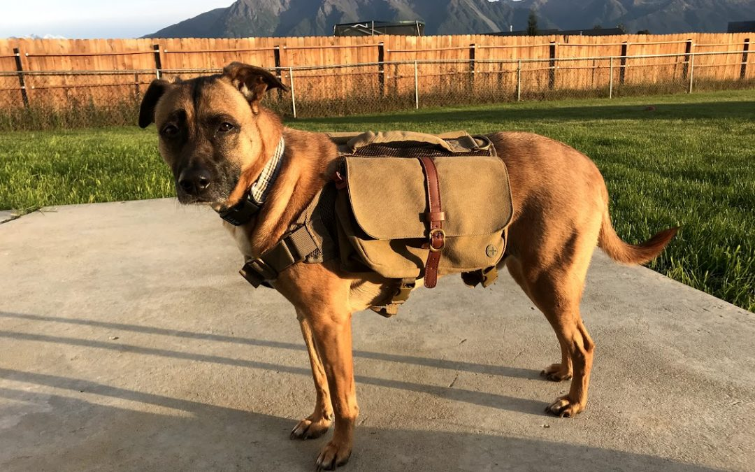 8 Fantastic Dog Backpacks They'll Enjoy Carrying!