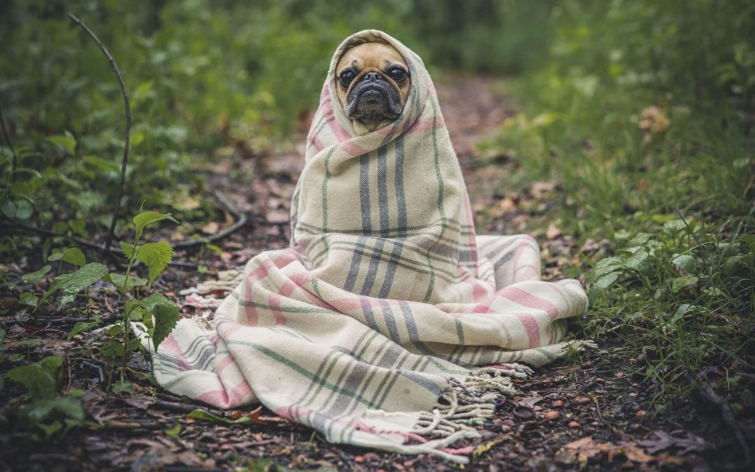 Helpful Ways To Calm Your Dog During Fireworks - Om Shanti Pups