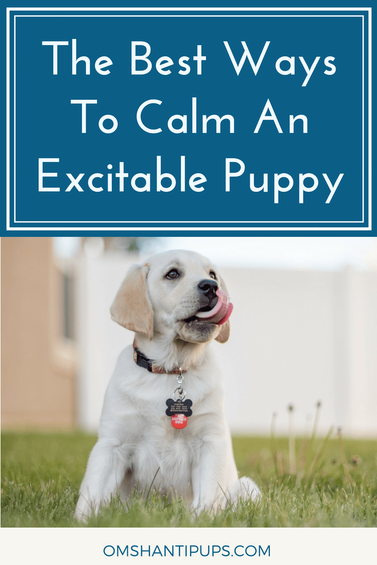Having a puppy is tough, yet extremely rewarding. These tips will help you bond with your new puppy and manage their excitable, formative years.