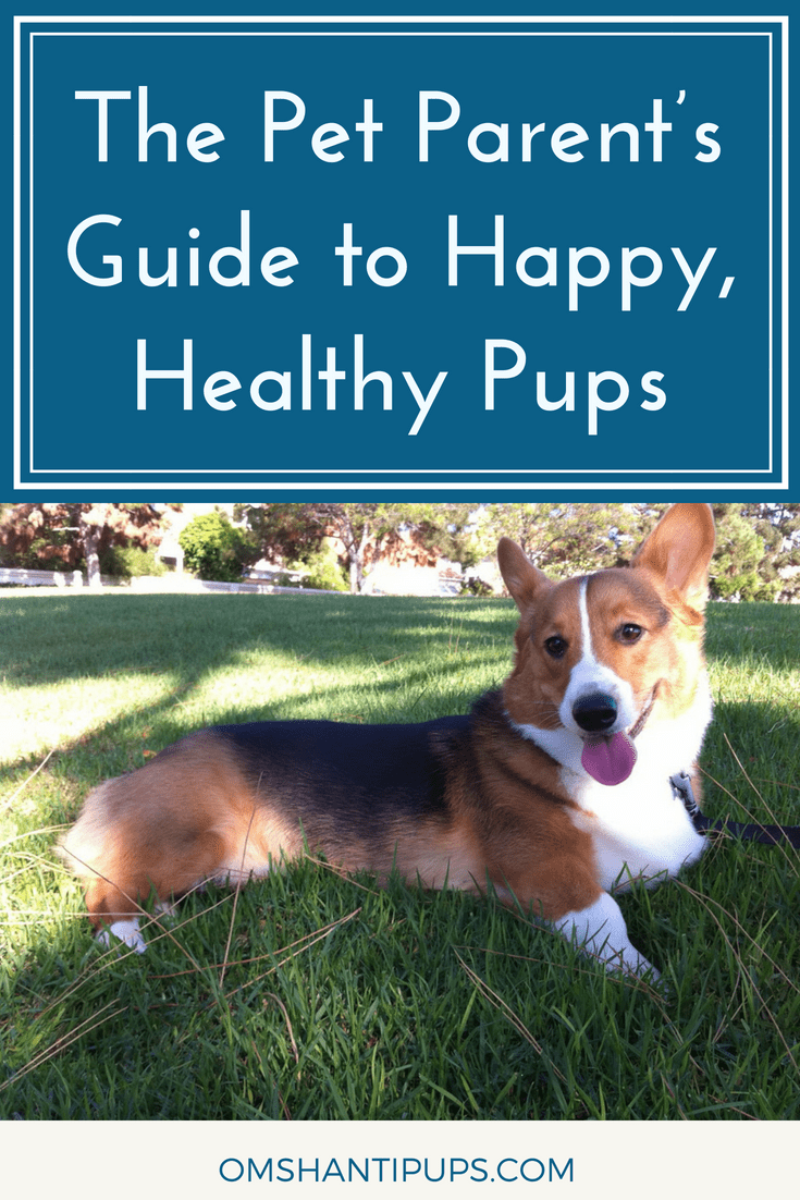 There are so many great reasons to own a dog. They're wonderful companions, and often hilarious! Check these awesome tips to keep your pet happy and healthy!
