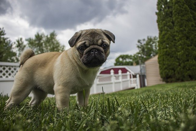 Hurricane Safety Tips to Keep Your Dog Safe and Happy During Storms