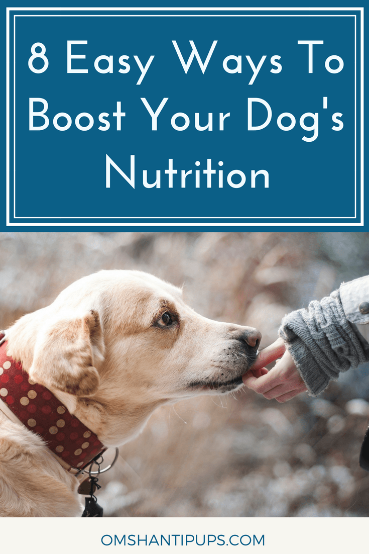 Even though the topic of dog nutrition sounds simple, it's easy to overlook the impact food has on our pets. Read on for eight tips on boosting your dog's nutrition.