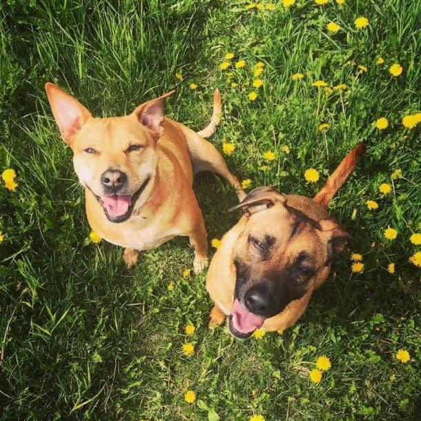 Roxy & Rico