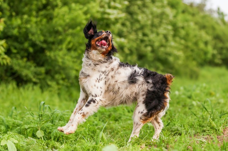 Dog Chasing Ball - Keep Dog Active During Social Distancing