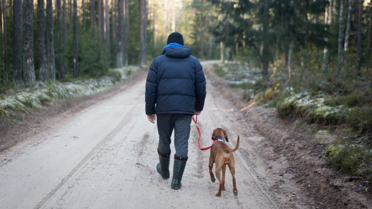 Helpful Dog Training Tips for People with PTSD