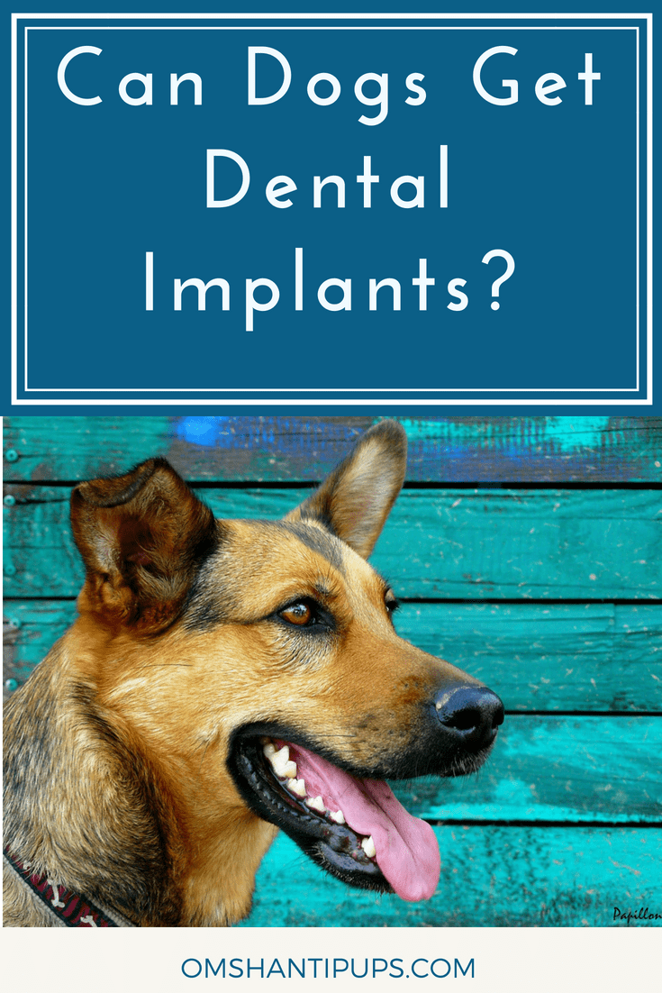 Did you know dogs can get dental implants? When dogs lose their teeth, it makes eating difficult. This results in nutrition deficiency and weight loss. Read on for tips to maximize your dog's dental health, and learn more about the dental implant process!