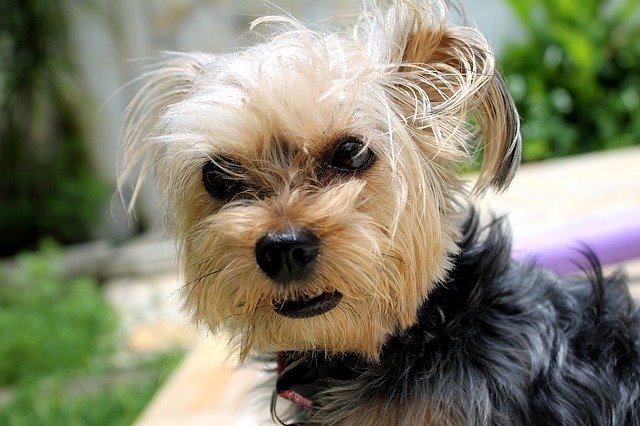 Helpful Tips to Effectively Manage Your Nervous Dog