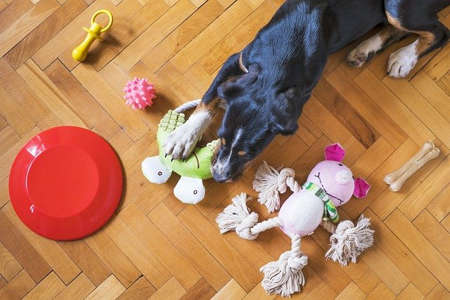 How Dog Toys Can Help Your Dog Stay Healthy