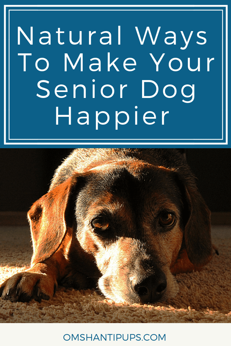 Senior dogs are extremely sweet and loving, but they often need a little more care and attention. Read on for natural ways to make your senior dog happier.