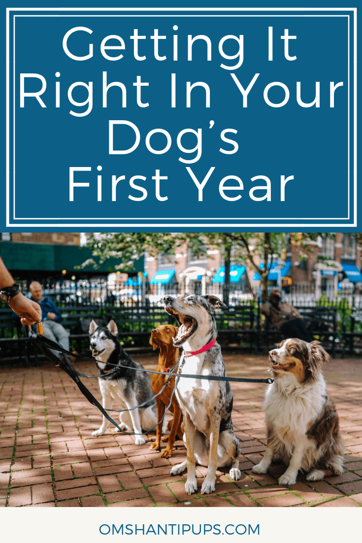 The first months of a dog's life are very important to their future. Here's what you should be doing to give your pup the right foundation in their first year.