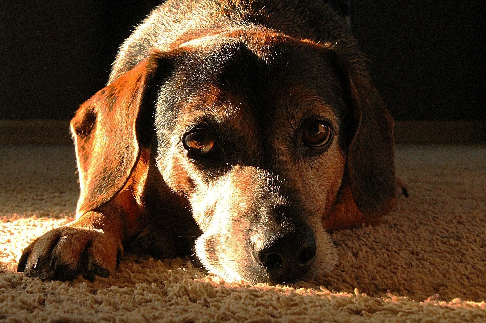 Natural Ways To Make Your Senior Dog Happier