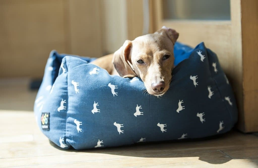 Best Ways To Save Money On Dog Needs With Amazon Subscribe & Save