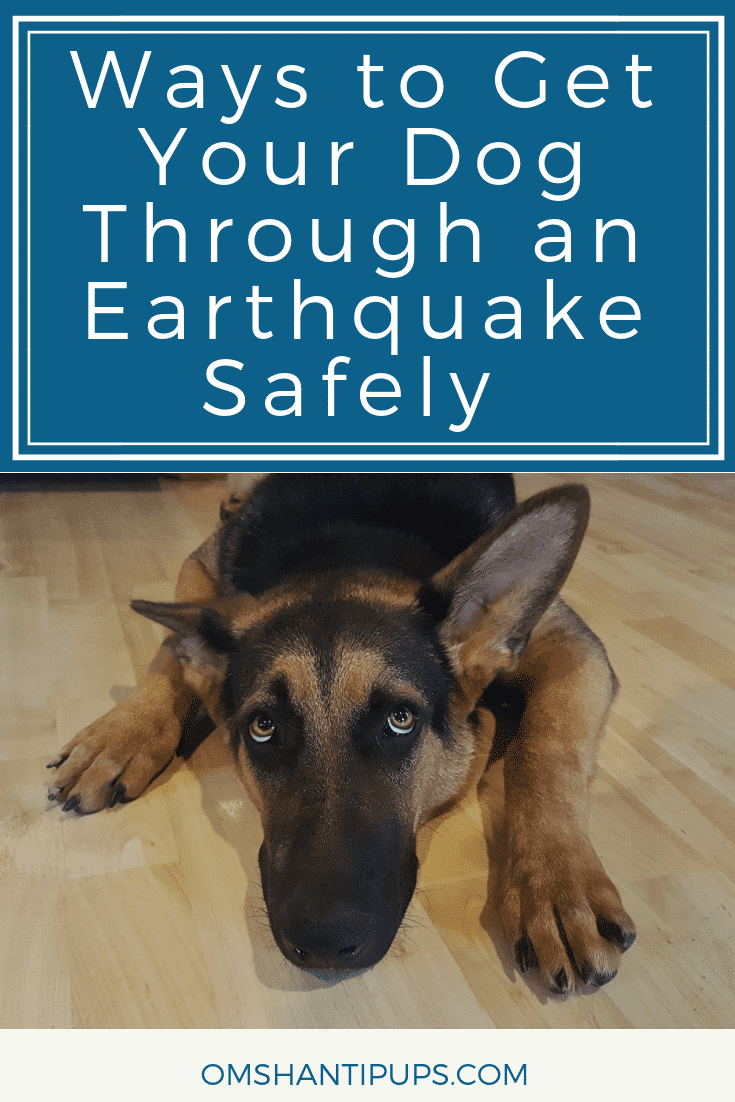 You may have heard that Alaska had a major 7.0 earthquake! We were right in it. Read on for some tips on how to get your dogs through earthquakes safely.