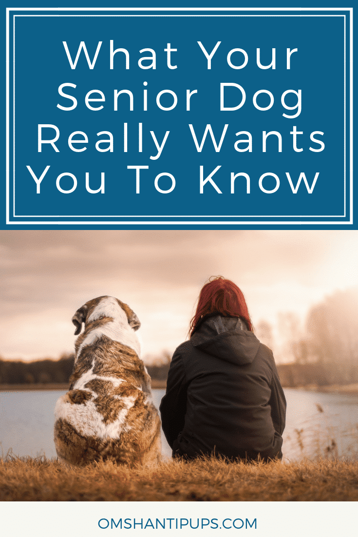 Loving a senior dog comes with its own unique set of challenges, but it can be very rewarding. Here are a few things your senior dog really wants you to know to keep them happy and comfortable.