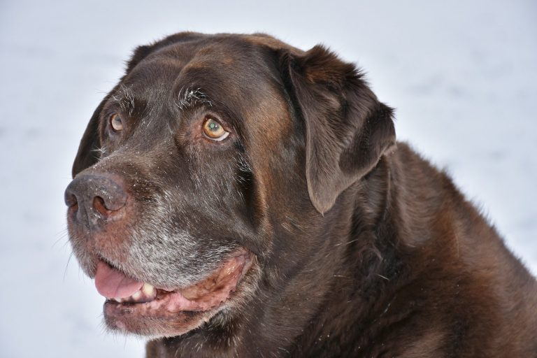 Super Fun Snow Day Activities For Dogs To Enjoy!