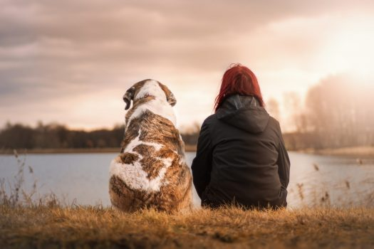 What Your Senior Dog Wants You To Know