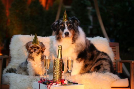 Ways To Calm Your Dog on New Year's Eve