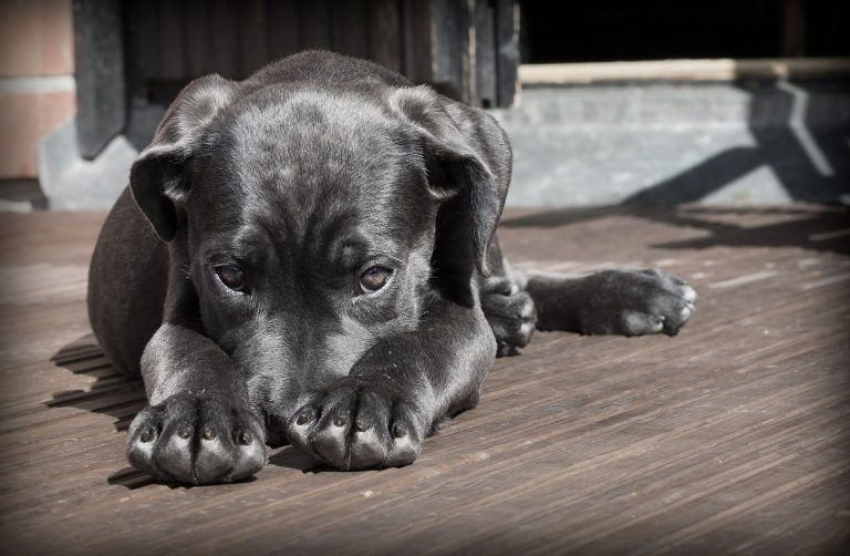 Ways to Get Your Dog Through an Earthquake Safely