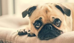 5 Ways To Calm Your Nervous Dog