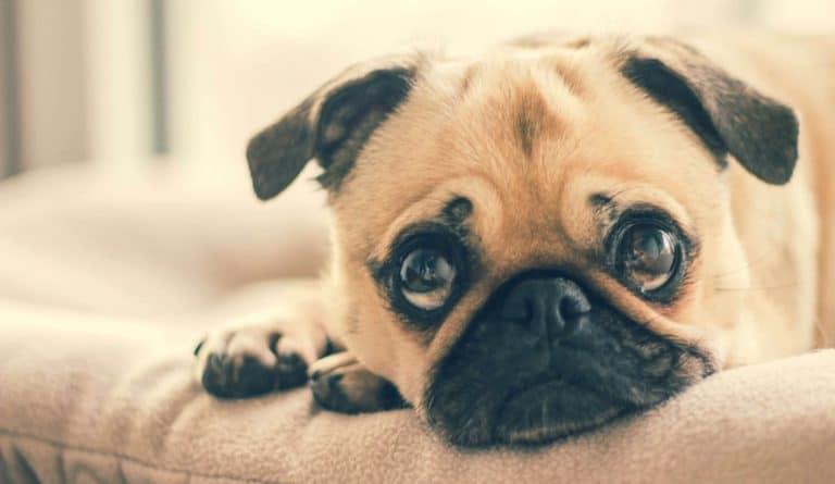 5 Ways To Calm Your Nervous Dog