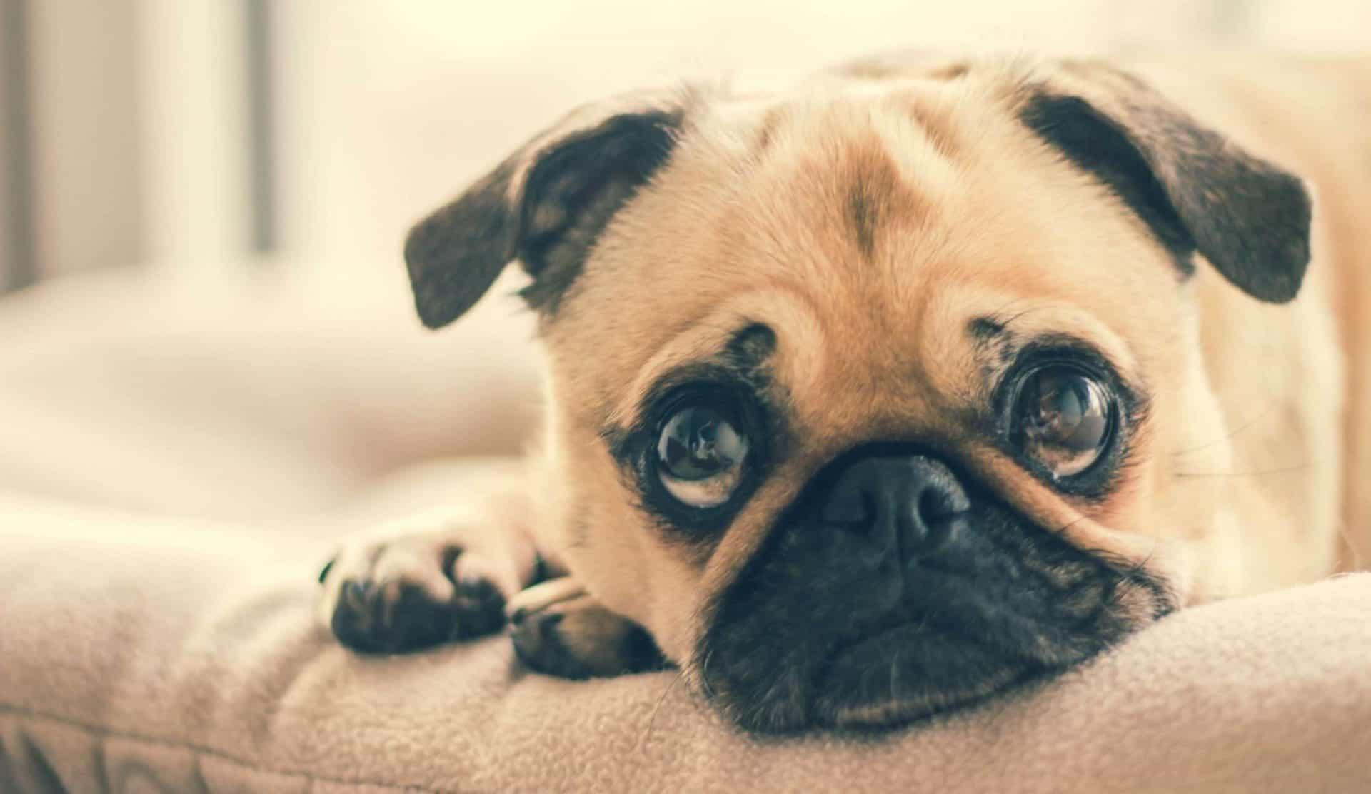 How to Calm a Nervous Dog