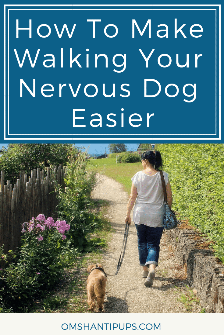 For nervous dogs, heading out for a daily walk can be a relatively stressful experience. 