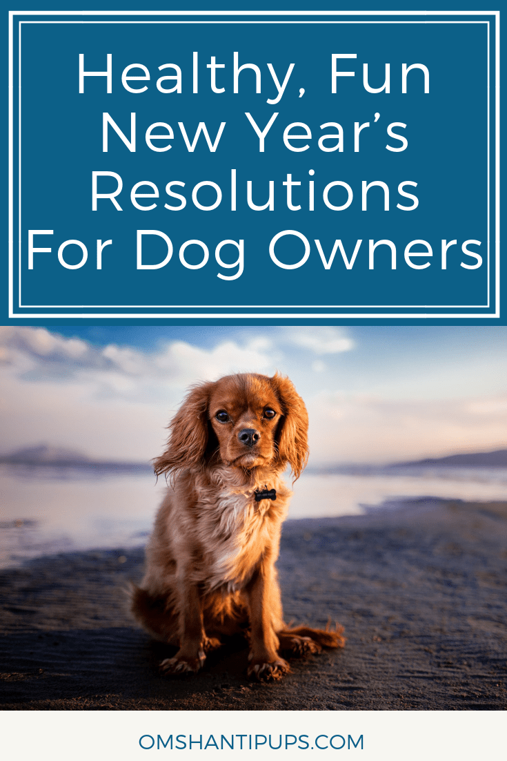 As we start another new year, it's the perfect time to think about what we want to achieve during the year ahead. Why not consider a New Year's resolution that is going to benefit your dog? Read on for New Year's resolutions for dog owners.