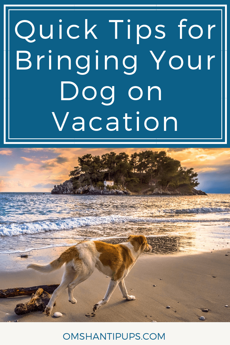Spring break will be here before you know it, and it's a great time for a getaway! If you can't imagine having an enjoyable break without your dog, why not consider planning a pet-friendly vacation? These quick tips will help you have a fun dog-friendly vacation.