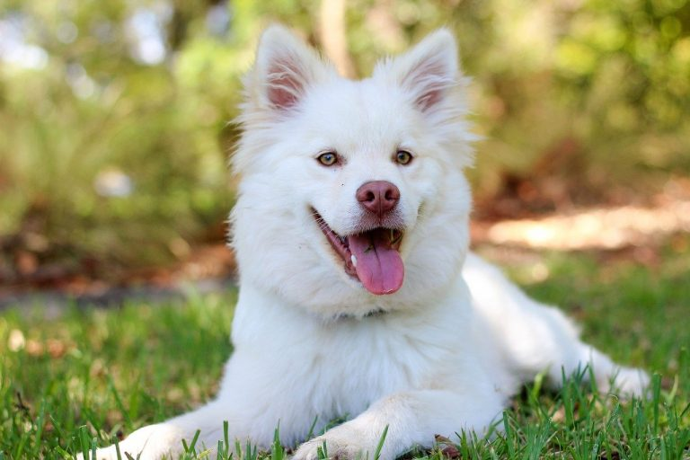 Ways To Determine If Your Dog Is Healthy