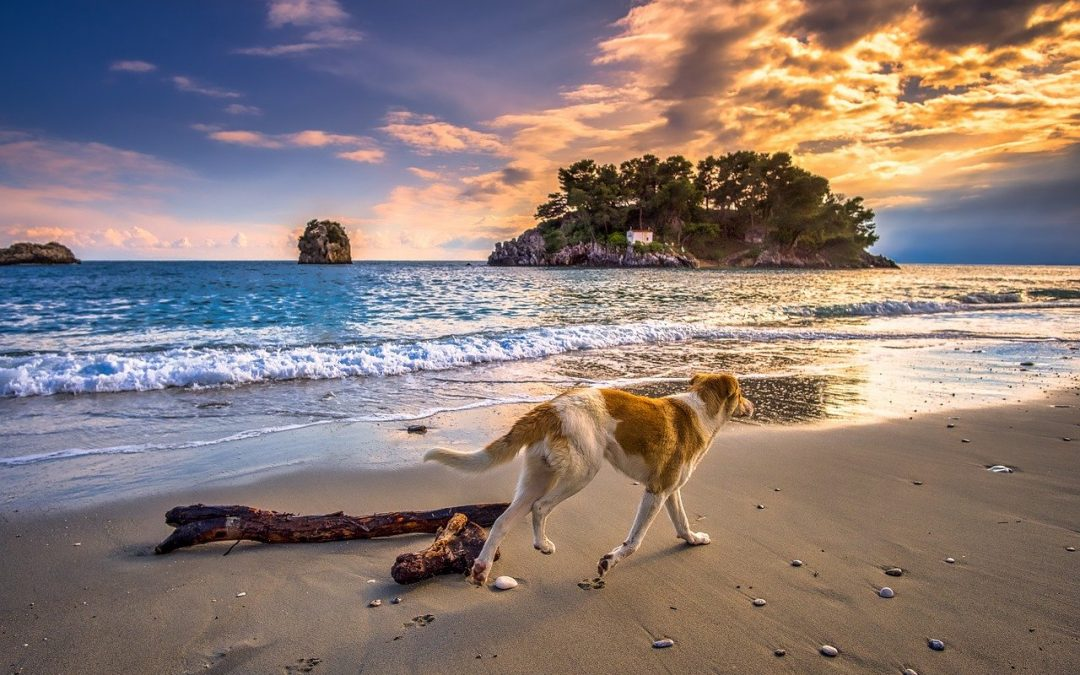 Quick Tips for Bringing Your Dog on Vacation
