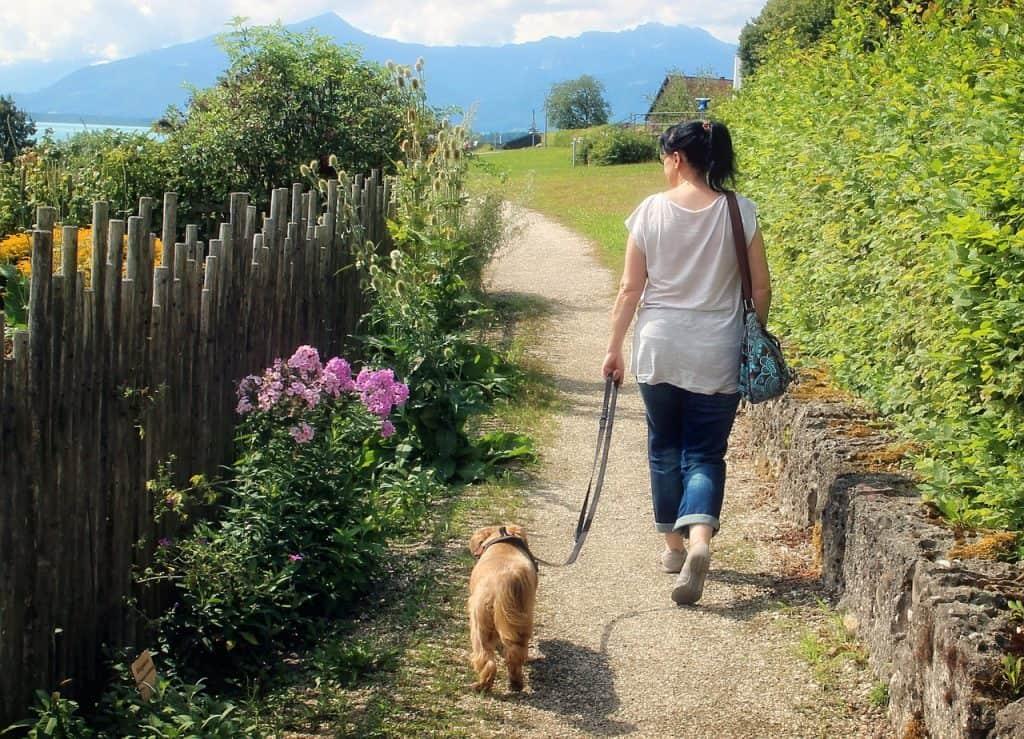 walking nervous dog easier