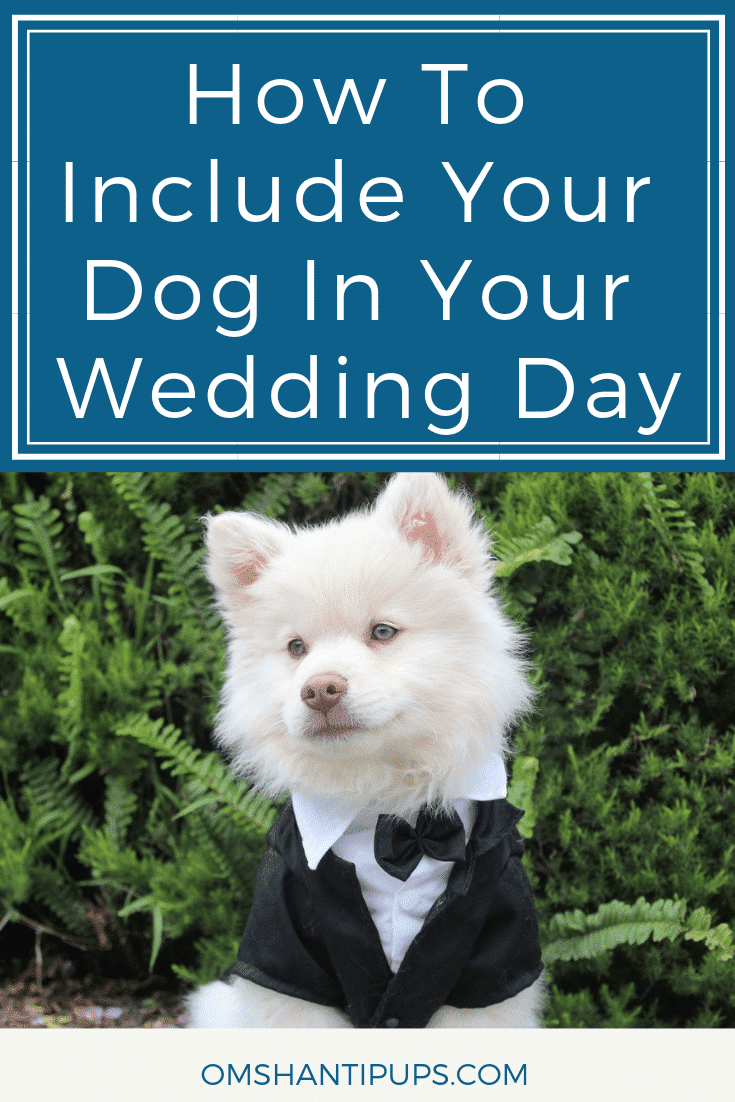 When you get married, you want to spend this special day with all of the important people in your life. For pet owners, this includes their dog. Read on for some great suggestions to make sure your dog is part of your special day!