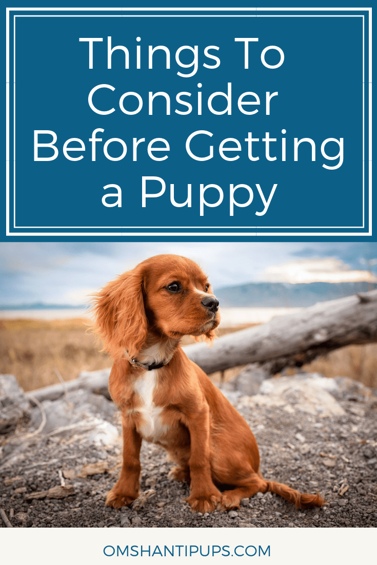 If you've been considering getting a puppy, I bet you're full of excitement! Raising a dog is one of the most rewarding things, but it can be pretty stressful. Especially during the puppy stages! Here are some things to take into consideration before getting a new puppy.