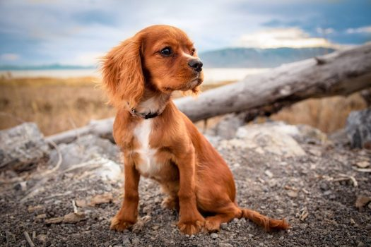 Things To Consider Before Getting A Puppy