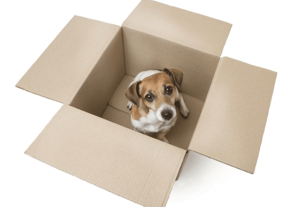 The Quick Guide to Moving with a Dog