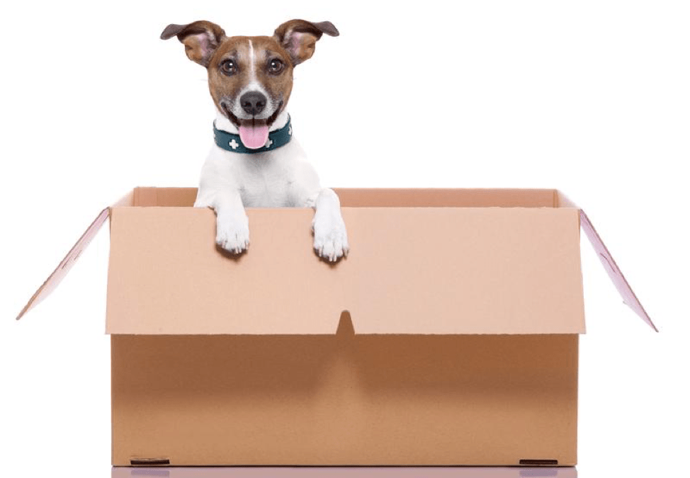 3 Steps for Making a Move with Your Dog as Painless as Possible